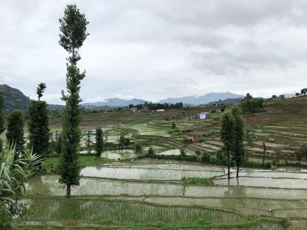 kathmandu-valley-july-2019-rice-fields-the-ruggist